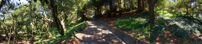 panoramic view of Buena Vista Park trail