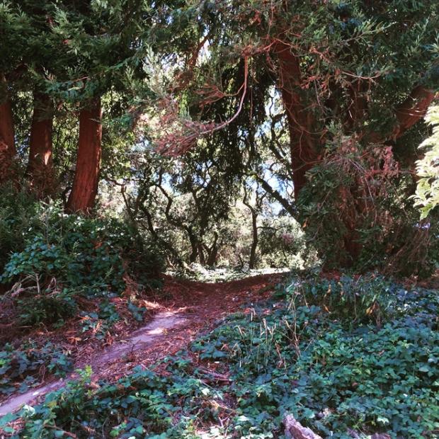 Buena Vista Park in San Francisco