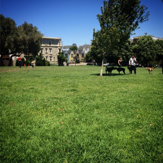 Duboce Park in San Francisco