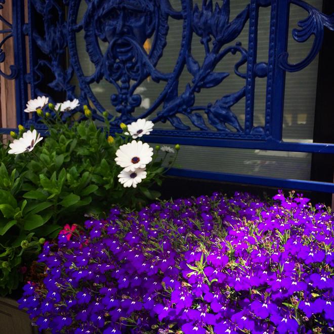 Presidio Heights flower box