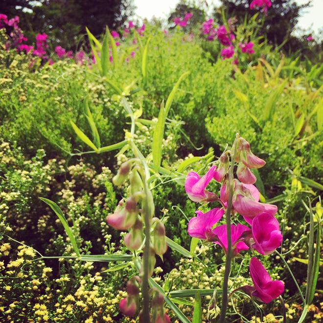 flowers in the Presidio