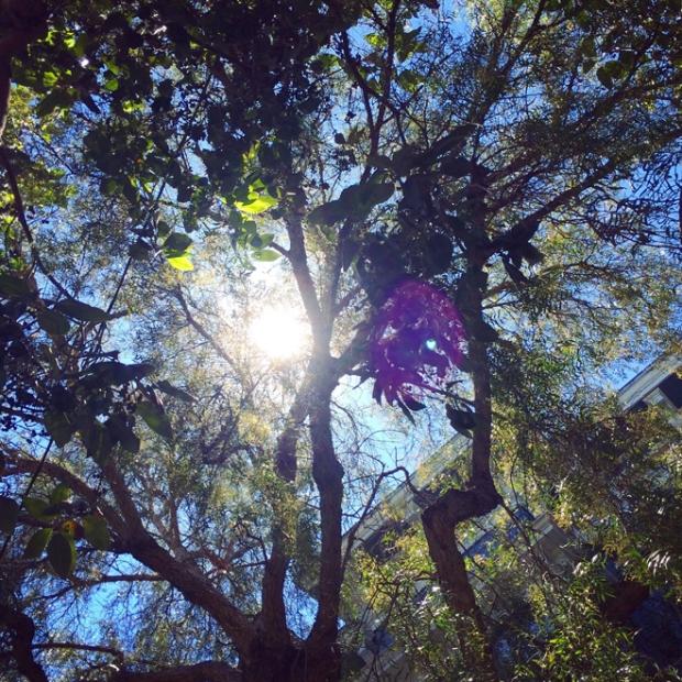 sunlit through trees