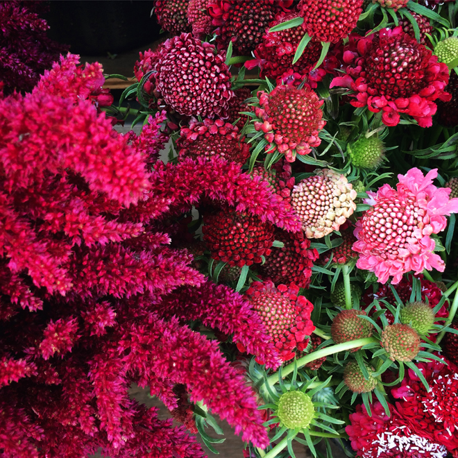 red and pink bouquets of flowers for sale