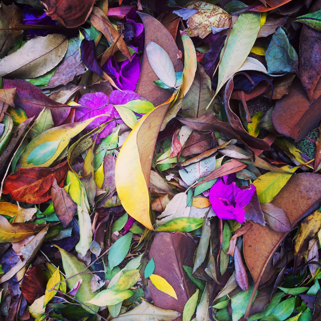 fallen flowers and leaves