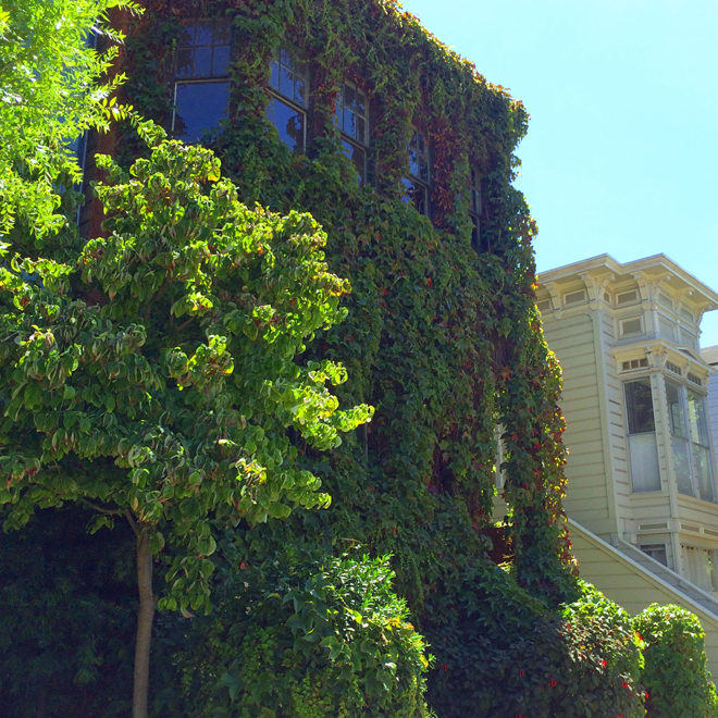 house covered in vines and ivy in the Castro District