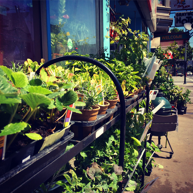 plants outside hardware store in the Mission District
