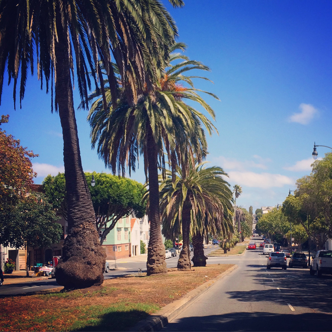 Dolores Street date palms