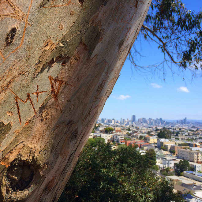 tree at Billy Goat Hill Park