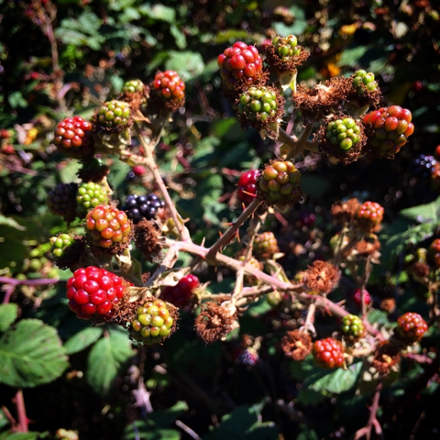 wild berries at Billy Goat Hill Park