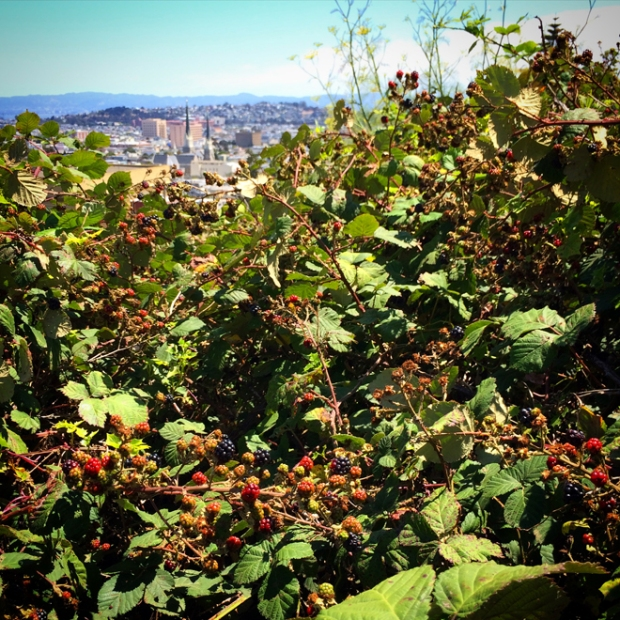 wild berries and city view from Billy Goat Hill Park