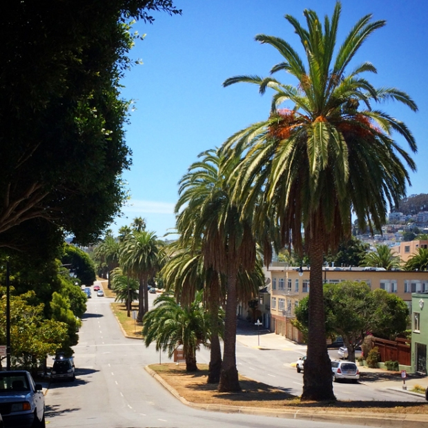 date palms along Dolores Street