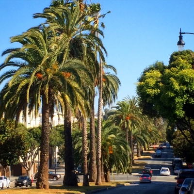 date palms along the median of Dolores Street