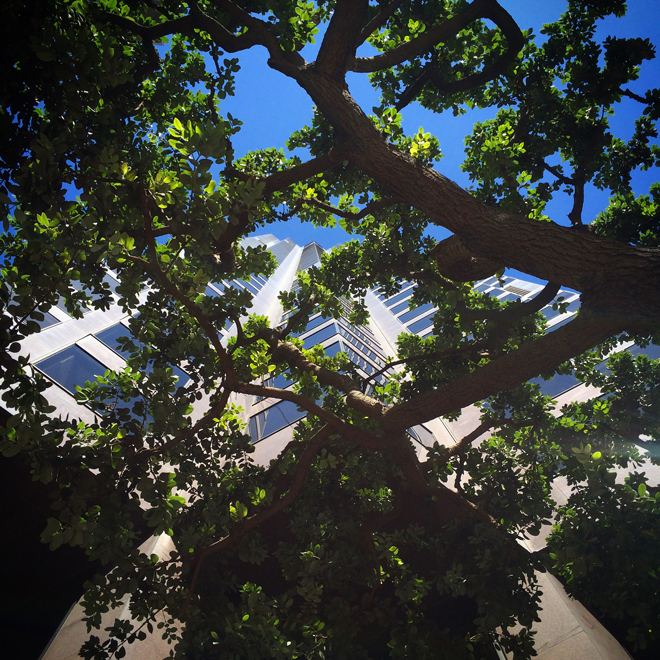 555 California Street building through the trees, Financial District