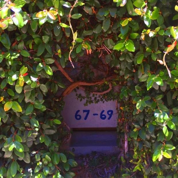 flowering vine covered building, Duboce Triangle, July 24 2015