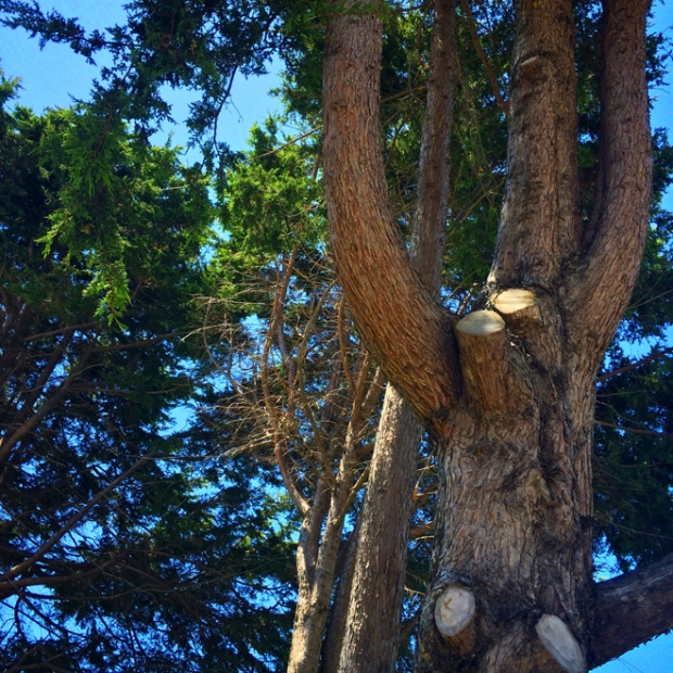 tree in Duboce Park, July 24th 2015