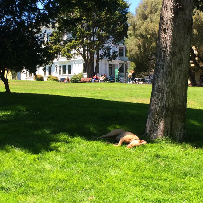 dog sleeping in Duboce Park, July 24th 2015