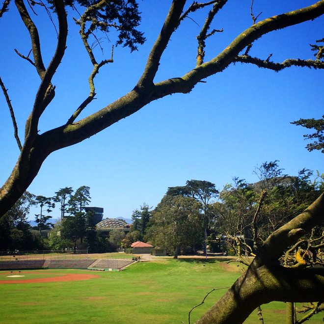 Golden Gate Park in San Francisco, July 24, 2015