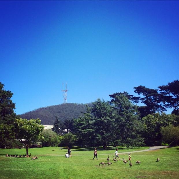 Botanical Gardens, Golden Gate Park in San Francisco, July 24, 2015