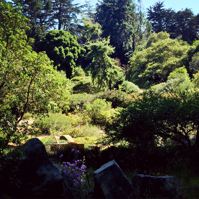 Botanical Gardens, Golden Gate Park in San Francisco, July 24, 2015
