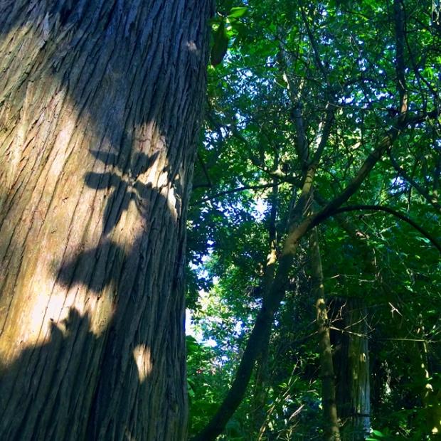 San Francisco Botanical Garden, Golden Gate Park in San Francisco, July 24, 2015