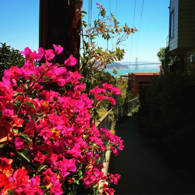 flowers and view of Bay Bridge from Greenwich Steps